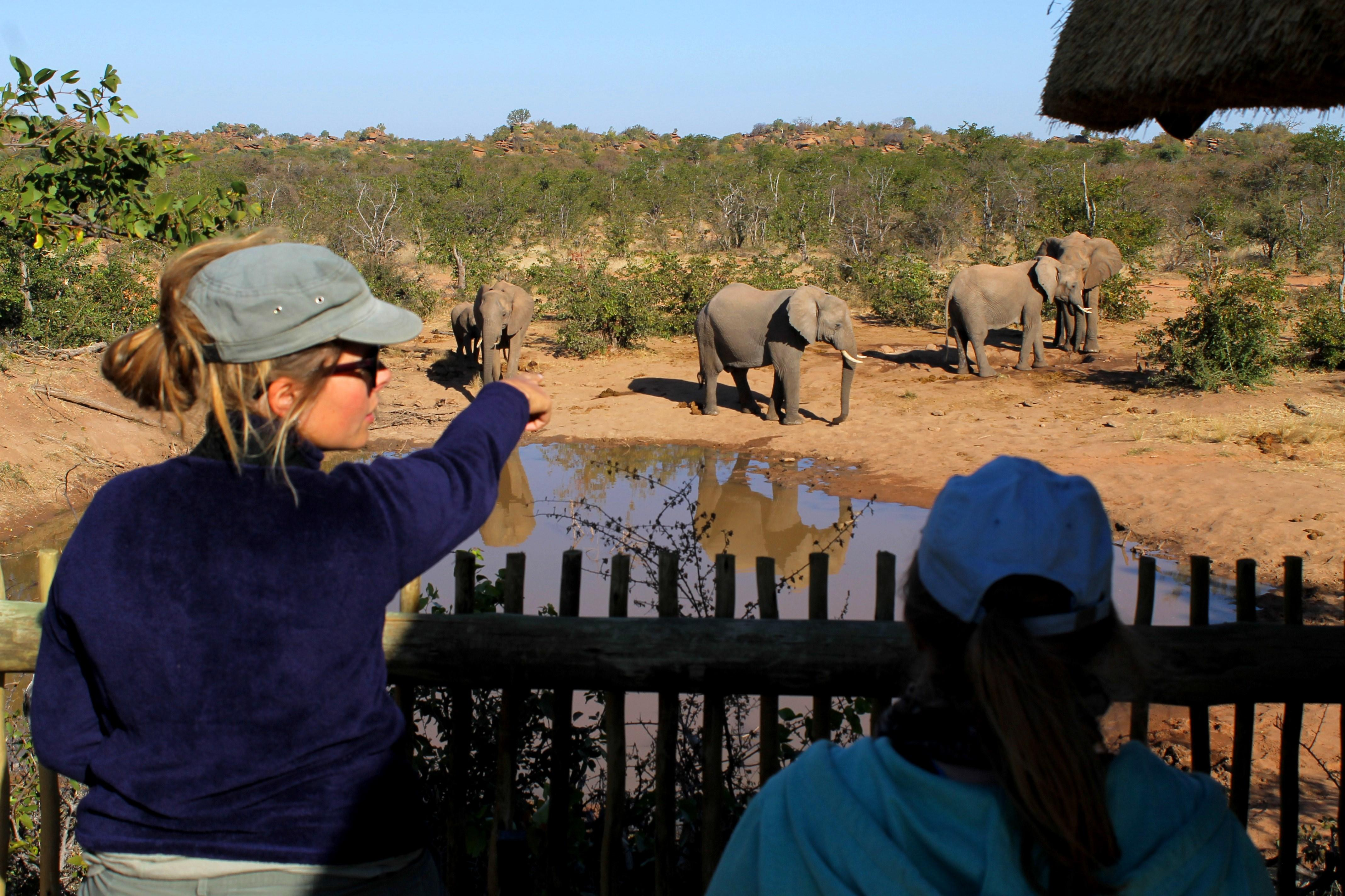 Projects Abroad volunteers help with vital elephant conservation work in Botswana on our placement for teenagers